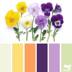 Design Seeds + Color Atlas by Archroma® Color Schemes Colour Palettes, Colour Pallette, Color Combos, Purple Color Schemes, Design Seeds, Color Balance, Color Harmony, Color Swatches, Pantone Color