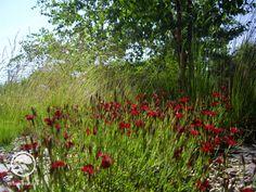#landscape #architecture #garden #meadow Meadow Garden, Landscape Architecture, Land Scape, Blog, Plants, Atelier, Blogging, Plant, Planets
