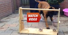 He Built The GREATEST Toy For His Dog! Wow, What An Awesome Idea!