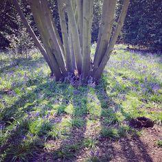 Untitled Instagram Posts, Plants, Plant, Planets