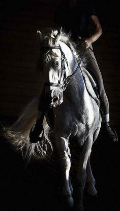 Il n'y a pas de secrets aussi Intimes que ceux d'un cavalier et de son cheval. Robert R. Surtees