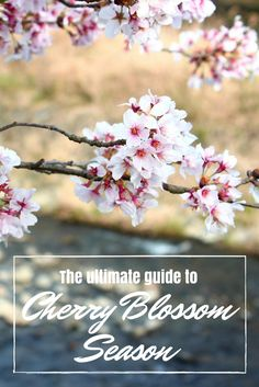 All you need to know about Cherry Blossom Season in Japan. Read about the best places to visit, when to go and how to plan your trip.