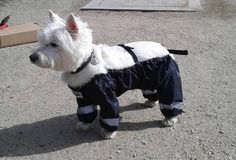 The company Muddy Mutts has created the dog pants for your furry friend. The dog pants keep the pups warm by preserving their body heat in the bitter cold