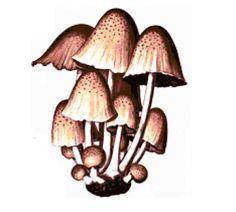 Brown Mushrooms Cross Stitch Pattern by jennrbee on Etsy