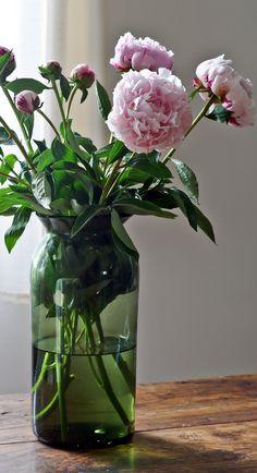 Pioenrozen vind ikhet mooist, zonder andere bloemen in de vaas. Dit is ook mooi.