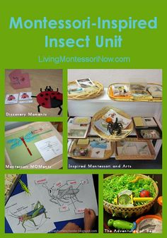 Montessori-Inspired Summer Themes // insects, rocks & minerals, construction, space, etc!