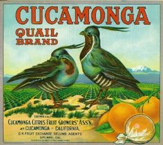 Cucamonga Quail Brand, Cucamonga Citrus Fruit Growers Association, Upland, San Bernardino County, California. Rancho Cucamonga would be later incorporated in the 1980's as a planned development bedroom community.