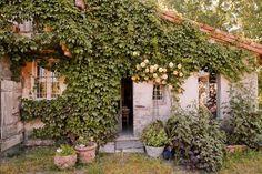 Plantas, árvores, sementes, amor em forma de planta