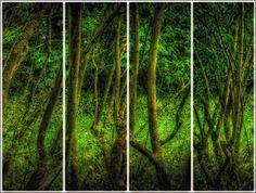 "Saatchi Art Artist Leigh Kemp; Photography, ""Branching Out"" #art"