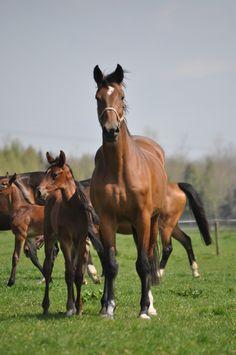 foal,mare.quickstar .calido mare.damline 474A.verdi TN. www.keystud.eu