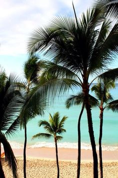 Summer Palm Tree
