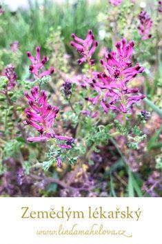 Herbalism, Gardening, Plants, Honey, Diet, Herbal Medicine, Lawn And Garden, Plant, Planets