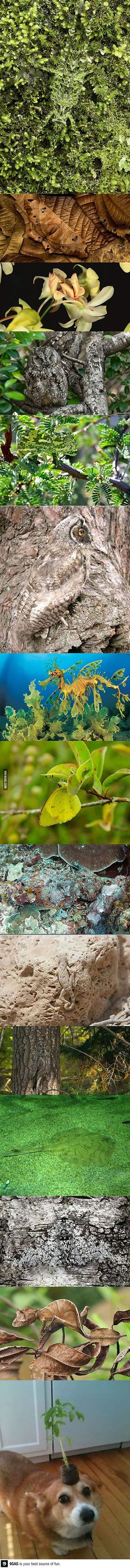 Camouflage in nature