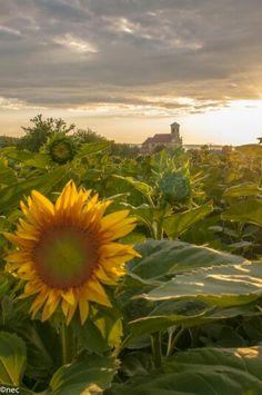 Sunset in Sopron.