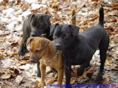 Just like my babies! Patterdale Terrier, Rare Dogs, Real Dog, Dog Rules, Animal 2, Hunting Dogs, Mixed Breed, Dogs Of The World, Terrier Dogs