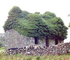 An abandoned stone structure near the Old Place of Monreith, Scotland has gotten a whole new roof, courtesy of Mother Nature.