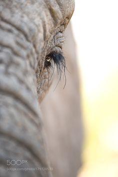 Elephant Eyeball by Rudi_Hulshof via http://ift.tt/2ffWbXK