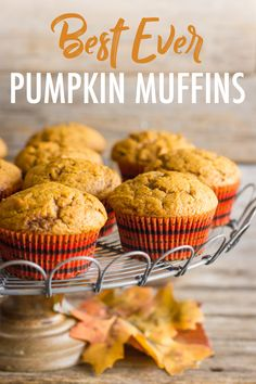I'm telling you, these pumpkin muffins are the best I've ever tasted! Perfectly sweet with just a little spice and anything but dry! Best Pumpkin Muffins, Pumpkin Muffin Recipes, Pumpkin Spice, Fall Recipes, Holiday Recipes, Breakfast Recipes, Dessert Recipes, Desserts, Breakfast Dessert