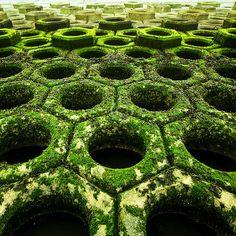 moss design. /#garden#shade#moss