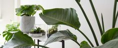 Bring life and interest to your interiors with indoor plants. Here are the top 10 trending indoor plants with loads of tips on how to care for them too!