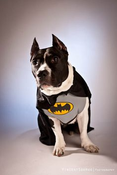 I love this Photo of Bat Dog ((Dog Portrait Photography Tips))