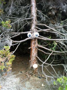 Googly Eye Tree at the U.S. National Arboretum