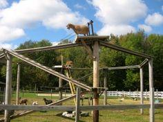 Klettergerüst Für Ziegen Bauen : 22 besten goats bilder auf pinterest landhaus ziegenstall und pferde