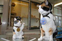 Twitter / ekichoTAMA: にゃんご!たま招き猫はこれのちい・・・っさいバージョンですにゃんご!