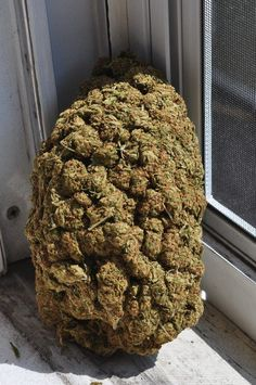We grow and sell top quality medical A+ hybrid, strains, indoor,CBD Oil,Moroncan Hash,Wax,Moonrocks and 100% organic. Strains currently available;100% safe and secure shipping worldwide call/text us (908) 758-4954 or visit oue site at http://www.medicalmarijuanaonsale.com