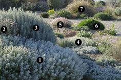 1 : Senecio vira-vira  2 : Phlomis purpurea subsp. almeriensis  3 : Artemisia arborescens 'Carcassonne'  4 : Artemisia lanata  5 : Rhodanthemum sp.  6 : Lomelosia hymettia  7 : Miscanthus sinensis 'Yaku Jima'