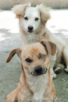 Photo about Dogs friends posing for the camera. Image of back, meditate, concentrate - 54752467 Dog Poses, Friend Poses, Pose For The Camera, Dog Friends, Small Dogs, Labrador Retriever, Meditation, Stock Photos, Cats