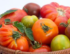 Growing Tomatoes: A Collection of Expert Advice