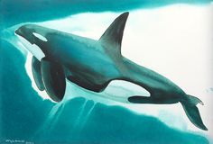 #orca watercolors art by #wyland. #mywatergallery
