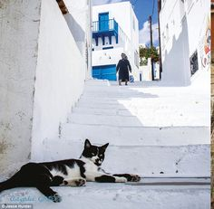 Photographer Jesse Hunter travelled the world in search of cute cats Visited 44 countries on six continents and photographed felines there.  On the prowl: A black and white cat surveys the scene from his perch on a set of steps in Astypalca in Greece