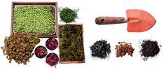 Sem espaço para plantar um jardim? Com um terrário, você pode ter até uma microfloresta