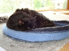 Neko in his felted kitty bed