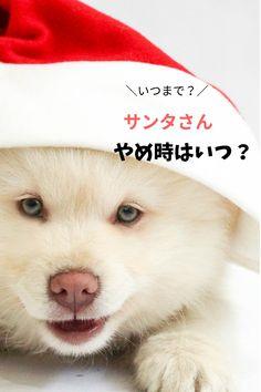 サンタクロースのプレゼント、どうやめる?卒業方法 Teddy Bear, Animals, Animales, Animaux, Teddy Bears, Animal, Animais