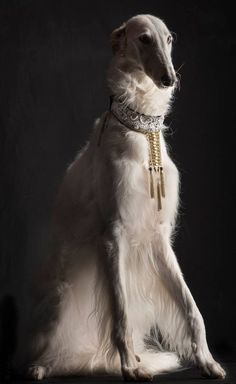 Russian Aristocracy - Borzoi - Wolfhound - From Russia With Love - Borzois , dog. - Pampered Pet's Complete Guide to a Safe Summer with Pets Beautiful Dogs, Animals Beautiful, Cute Animals, Beautiful Pictures, Pet Dogs, Dogs And Puppies, Doggies, Borzoi Dog, Whippets