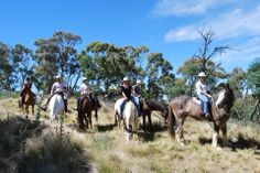 High Country Trail Rides will let you explore the spectacular Blue Mountains High Country on horseback and quad bikes, ride beneath a canopy of pine. Mountain Style, Mountain High, Trail Riding, Horse Riding, Quad Bike, Places Of Interest, Things To Do, Horses, Explore