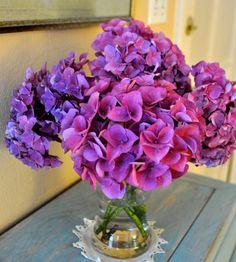 Drying Hydrangeas The Gardener   Apartment Therapy