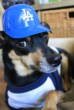 Charlie all ready for the #Dodgers game!