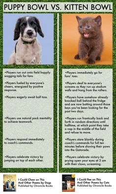 Puppy Bowl Vs. Kitten Bowl