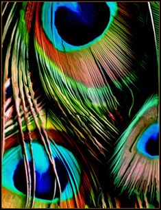 How can something be so beautiful? Never tire of all the colours that make a peacock feather magnificent! Peacock Bird, Peacock Colors, Peacock Design, Peacock Feathers, Feather Art, Peafowl, Krishna Wallpaper, Belly Dance Costumes, Mundo Animal