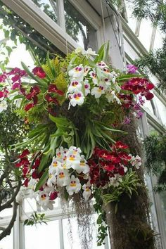 Orchids in a hanging basket