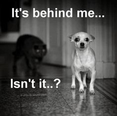 Funny Sayings with Captions   Funny dog photo with caption dog stalked by cat