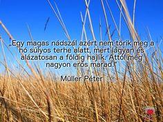"""""""Egy magas nádszál azért nem törik meg a hó súlyos terhe alatt, mert lágyan és alázatosan a földig hajlik. Attól még nagyon erős marad."""" Müller Péter"""