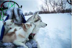Winter wonderland. Russian photographer Fox Grom
