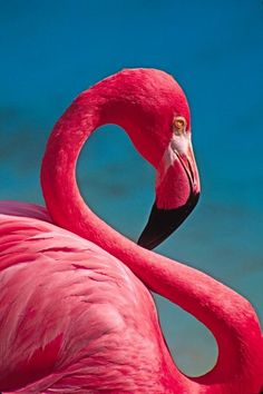 This is a good example of an 'S' curve. The neck of the flamingo makes a clear S shape.