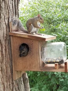 hnliche artikel wie nuthouse squirrel jar feeder great gift and entertainment for you and. Black Bedroom Furniture Sets. Home Design Ideas