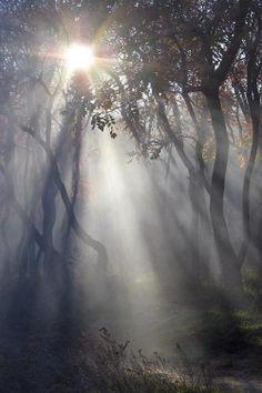 Enchanted Forest - Angelina Tarasenko